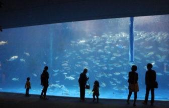 いおワールドかごしま水族館